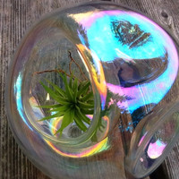 Air Plant Glass Terrarium clear soap bubble  by VitalitySpeaks