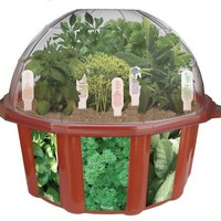 DuneCraft Dome Terrariums - Herbs