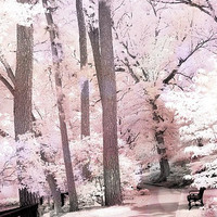 """Nature Photography, Dreamy Pink Nature Woodlands, Ethereal Pink Trees, Surreal Pink Landscape, Pink Woodlands, Fine Art Photograph 8"""" x 12"""""""