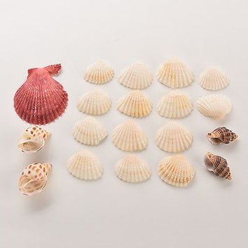 Beach Mixed SeaShells Mix Sea Shells Shell Craft SeaShells Aquarium Decor 3C