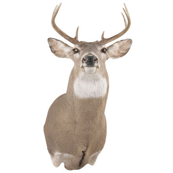 Big Buck Mount Wall Decal