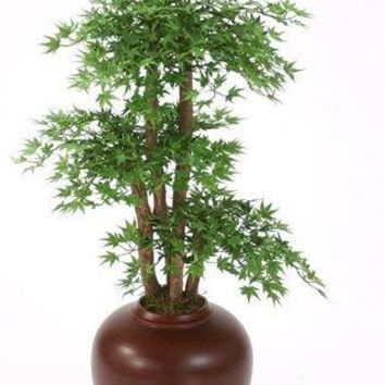 Japanese Maple Floor Plant In Flame Tapayan Jar