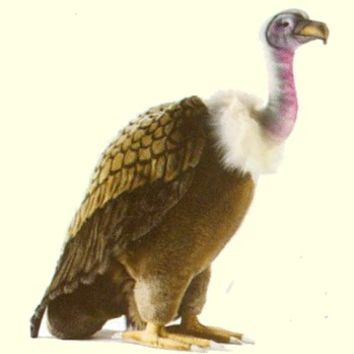 Small Hansa Vulture Stuffed Animal