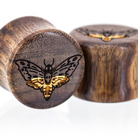 Plugs: Death's Head Hawk-Moth