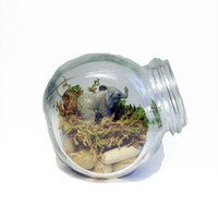 Recycled Elephant Jar Terrarium