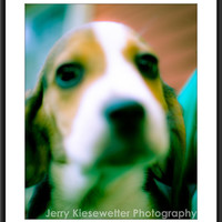 Beagle Puppy Photo, Hunting Dog Photograph, Abstract Pet Portrait, Cute Animal Portrait, Home and Wall Decor