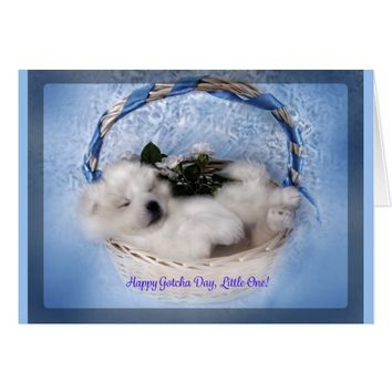 "Samoyed Puppy Greeting Card: ""Gotcha""Day Celebrate Card"