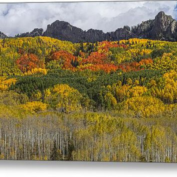 Colorado Kebler Pass Fall Foliage Acrylic Print