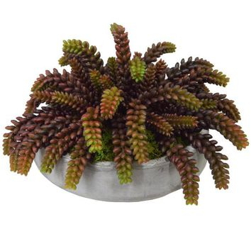 Sedum Succulents in Concrete Bowl Burgundy