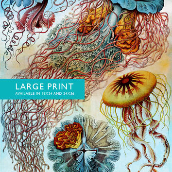Ernst Haeckel Discomedusae Print Jellyfish Art Vintage Nautical Decor Ocean Wall Art - Giclee Print on Canvas & Satin