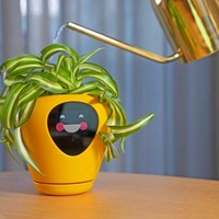 This Smart Planter Will Monitor Your Indoor Plants and Works Like a Tamagotchi Pet