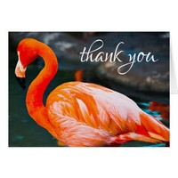 Thank You, Orange Pink Flamingo Photo Blank Inside Card