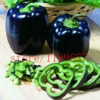 pepper seeds 200 chili black and purple sweet pepper seeds NO-GMO vegetable seeds for home garden planting