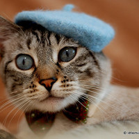 Cat French Beret - Wool Hand Felted Mini Beret for Pets