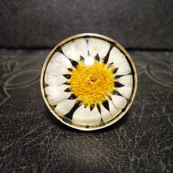 Black Real Preserved White Daisy Specimen Ring