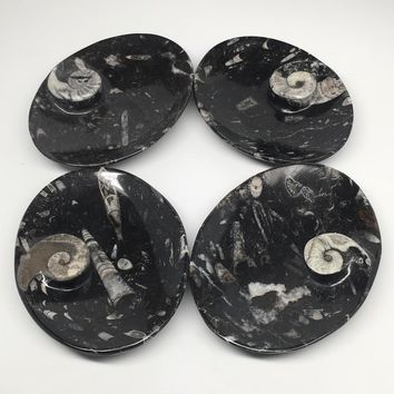 "4pcs,6.25""x4.75""x5mm Oval Fossils Orthoceras Ammonite Bowls Dishes,Black, MF1378"