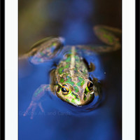 Motorbike Frog Wall Art, Australian Animal, Birthday Gift, Nature Photography,