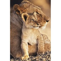 Animals Posters: Lion - Lion And Cub 2 - 35.7'x23.8' Photography Poster Print, 24x36
