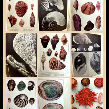 The Shell Book, Antique Seashell Book, Seashell Illustrations, Seashell Ephemera,Nautical,RARE BOOK ,Sea Lover Gift,Educational,Ephemera