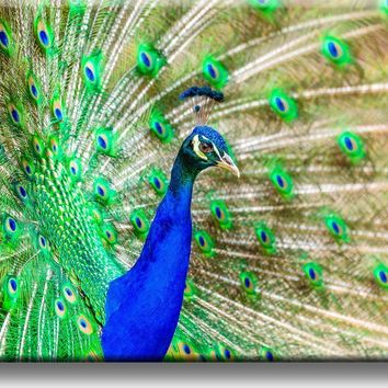 Beautiful Peacock Picture on Acrylic , Wall Art Décor, Ready to Hang