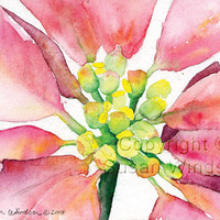 SALE Watercolor Poinsettia 8x10 print