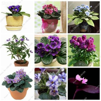 Persian Violet Seed 25 Colors Collection Exotic Bonsai Flower Potted Plant Perennial Herb Seed, Home Garden Supplies 100 Pcs