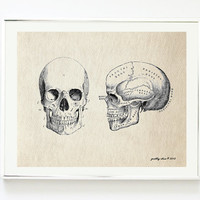 Vintage Skull Anatomy Art Print - Antique Curiosity Art Prints - Head - Anatomy - Art Print - Wall Art - Curiosities
