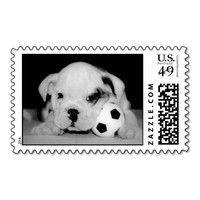 English Bulldog Soccer Puppy