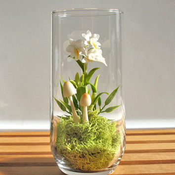 Exotic Dendrobium Orchid Terrarium by Miss Moss Gifts