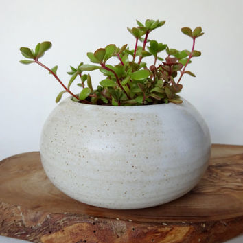 Small White Vase - Pot for succulent plants - Handmade Ceramic pot