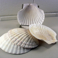 Vintage Natural Sea Shell Snack Appetizer Trays Tiki