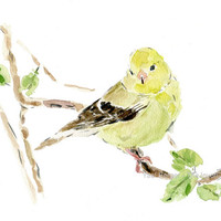 Eastern goldfinch watercolor print ,  goldfinch art, Bird art,  lime yellow, green, wild canary watercolor, New Jersey state bird, wild life
