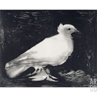 Dove, 1949 Art Print by Pablo Picasso at Art.com