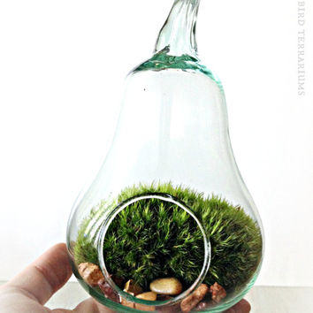 Pear Shaped Glass Terrarium / Live Plant Moss / Fruit Jar