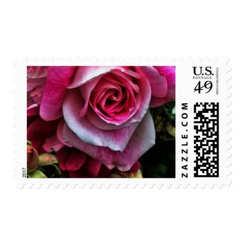 Large Pink Rose Postage