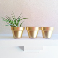 Gold Mini Planters,herb garden pots, Tillandsia planter, Flower sculpture display