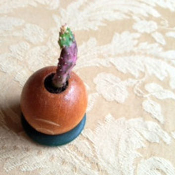 Tiny cactus planted in a wooden bead pot with a button bottom