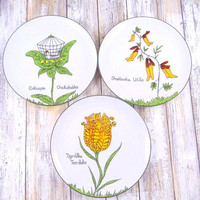 Vintage Nonsense Botany Plates - Edward Lear Illustrations - Scully and Scully New York