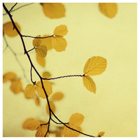 Hello Yellow - Fine Art Photograph