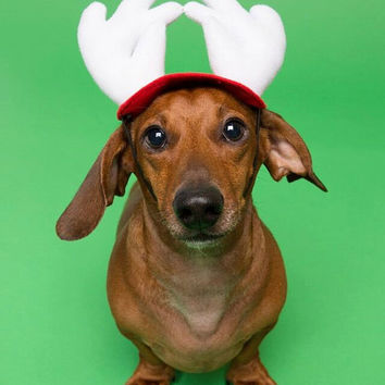 Dog Christmas Hat - Dog & Cat Costume - Christmas Reindeer Hat - Antlers- Handmade- Small Pet Gift - Turn your pup into a flying reindeer!