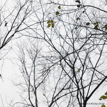 Abstract trees landscape photography, autumn, empty, silver, silhouette photo art, visual, art, fall photography wall art, décor, ideas