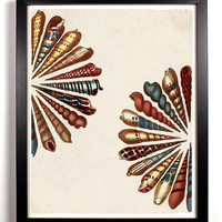 The Decorative Spiral Shells Antique Illustration  8 x 10 Giclee Art Print Upcled Collage Recycled Book Art Buy 2 Get 1 FREE