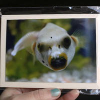 Photo greeting cards. Set of two with envelopes. Dog Face Puffer