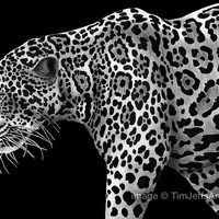 Jaguar Ink Drawing