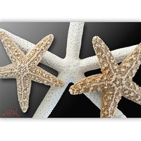 Seashell Wall Decor for Bathroom, Seashell Art, Beige Art, Starfish Decor, Bathroom Art, Wall Art For Home, Bath Art, Bath Decor, Neutral