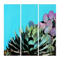 Agave and Prickly Pear on Turquoise Wall Southwest Triptych