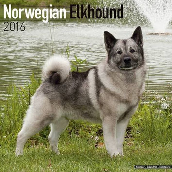 Norwegian Elkhound Calendar - Breed Specific Norwegian Elkhound Calendar - 2016 Wall calendars - Dog Calendars - Monthly Wall Calendar by Avonside
