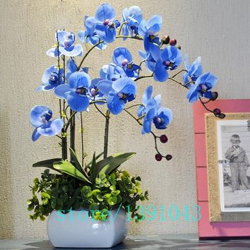 100pcs/bag purple blue orchid seeds,phalaenopsis orchid,bonsai flower seeds,orchid pots,plant for home & garden