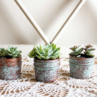 Potted Succulents; Aged Copper; Mason Jars; Distressed Mason Jar; Centerpiece; Wedding Decor; Gift; Pot; Succulent; mothers day; Half Pint