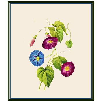Morning Glory Blossoms Inspired by Pierre-Joseph Redoute Counted Cross Stitch Pattern